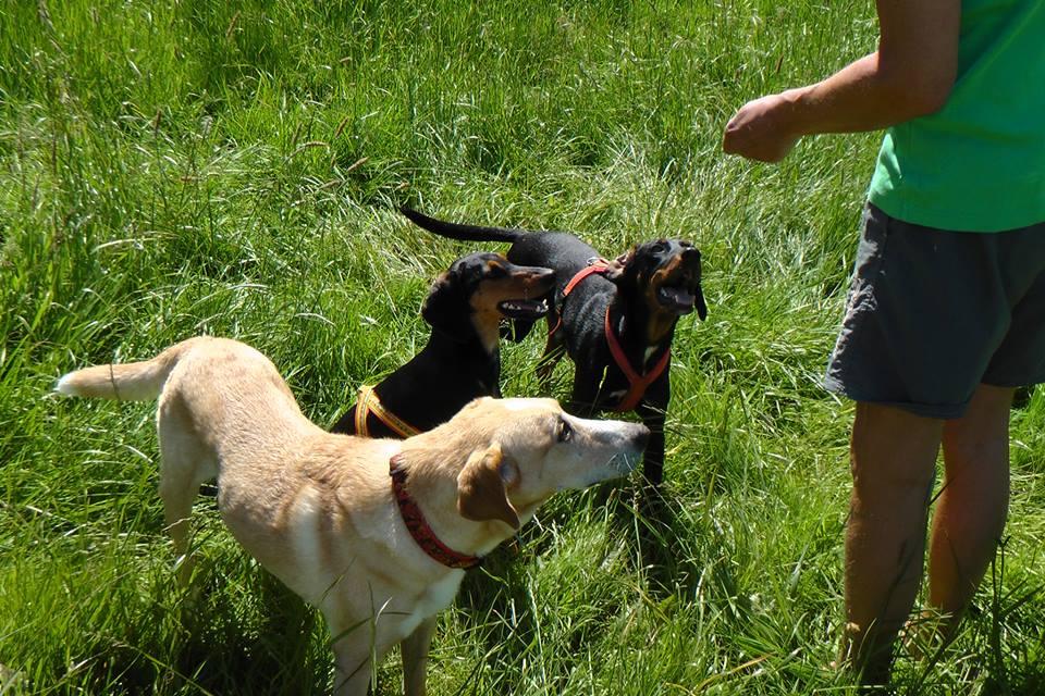 Hundebuch Joseph - Zurück im Leben