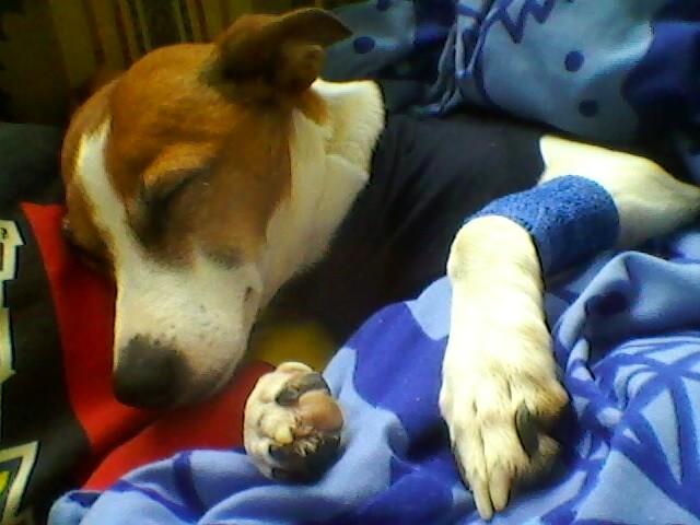 hund-luna-operation