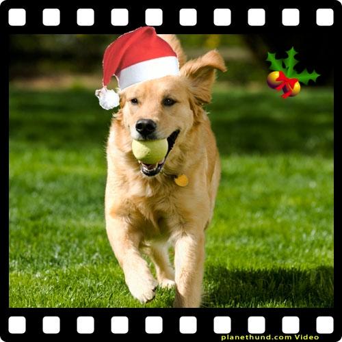 planethund-videos-weihnachten