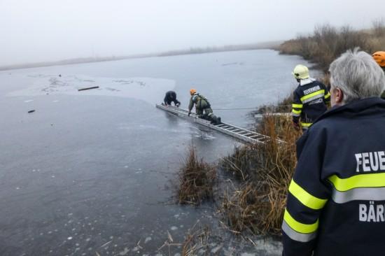 Rettung Hund Mensch Teich