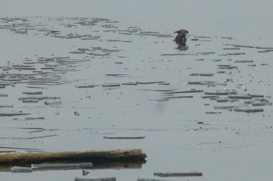 Hund im Teich eingebrochen
