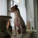 Der geschenkte Hund – Eine Weihnachtsgeschichte von Severine Martens