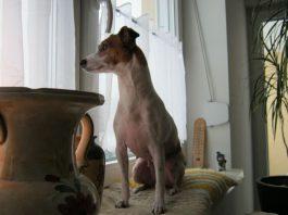 weihnachtsgeschichte-hund-luna-2010