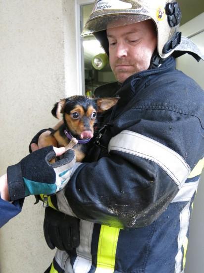 Tierrettung Feuerwehr Hesperingen