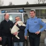 Nach Autounfall auf der A45 vermisster Hundewelpe nach zwei Tagen gefunden