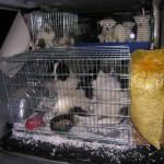Illegaler Hundetransport aufgedeckt: 43 Hundewelpen sicher gestellt