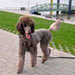 Nonverbale Kommunikation bei Hunden