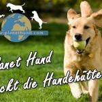 Jahresrückblick 2013: Planet Hund rockt die Hundehütte