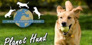 Planet Hund Hundehütte