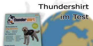 Thundershirt Hunde Test