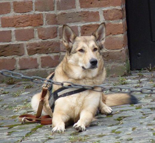 Stadttraining Hund