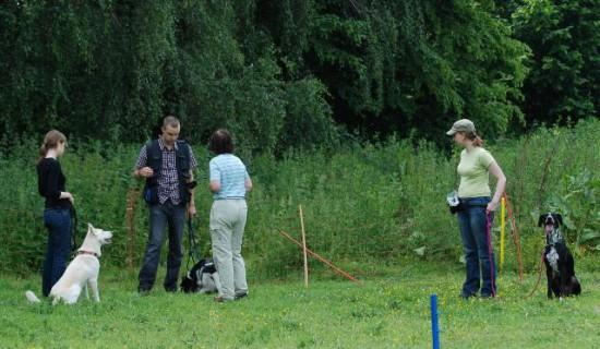 Trainer Teilnahmer Hundeplatz