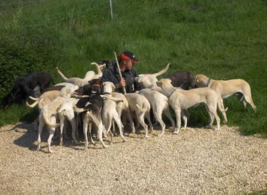German Trailhounds