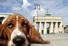 Berlin Hund