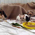 Nürnberger Zoll stoppte illegale Welpentransporte: 114 Hundewelpen & 10 Katzenbabys gerettet