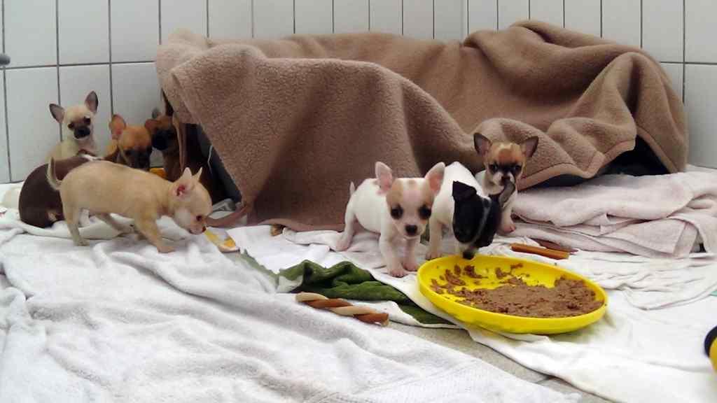 Nurnberger Zoll Stoppte Illegale Welpentransporte 114 Hundewelpen 10 Katzenbabys Gerettet Planet Hund