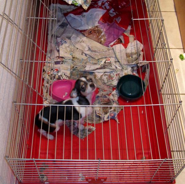 hund-kaninchenkaefig-polizei-landshut