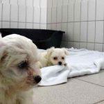 Malteser Tierheim Feucht