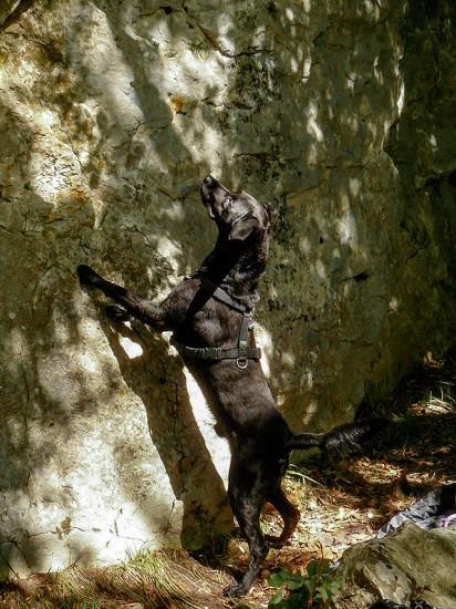 Felswand Hund Klettern