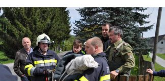 Feuerwehr Voitsberg Hund