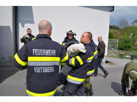 Feuerwehrmann trägt Hund