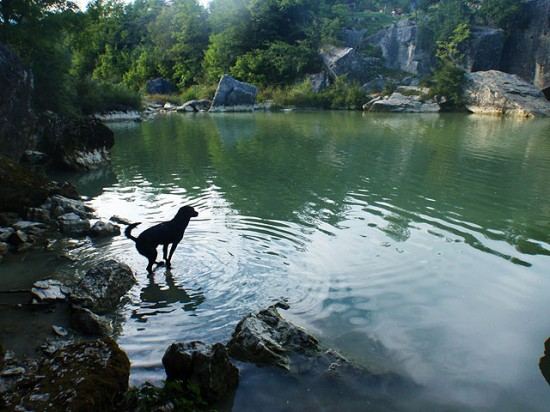 Hund Pazin Schwimmen
