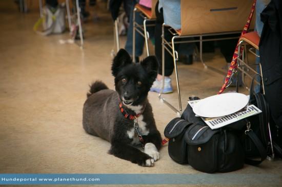 Hund Seminar
