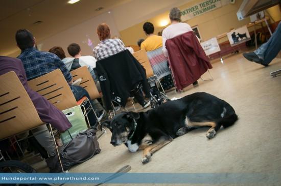 Hund Saal Menschen