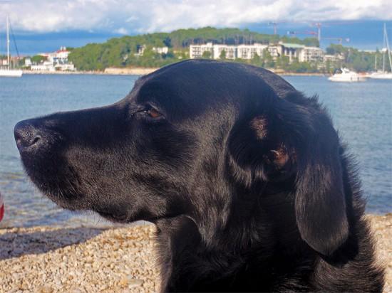 Hundestrand Rovinj Kroatien