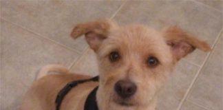 Hund Nico,