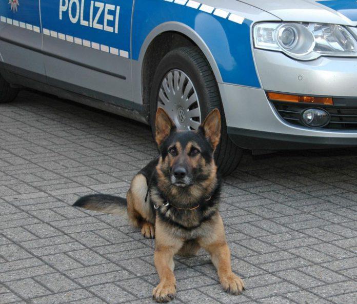 Polizeihund Henri