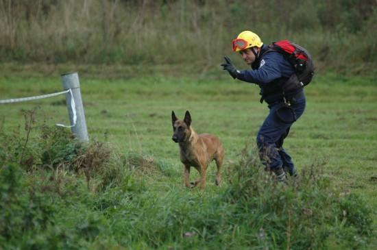 Rettungshund Suche Iro