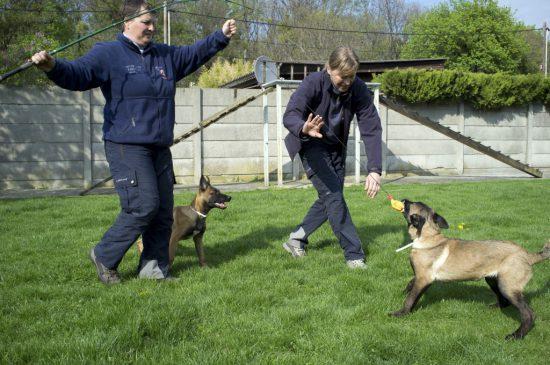 Welpen Hunde Rettungshunde Ausbildung