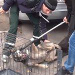 Rumänische Staatsanwaltschaft ermittelt gegen Tierschutz-Aufsichtsbehörde ASPA