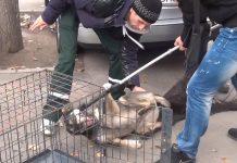 Rumänien Hunde
