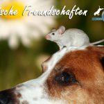 Freundschaft zwischen Tieren: Hund und Ratte