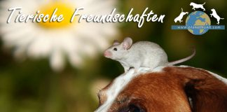 Tiere Freundschaft Hund Kleintiere