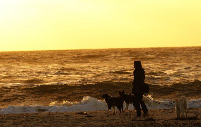 Sonnenuntergang Hunde
