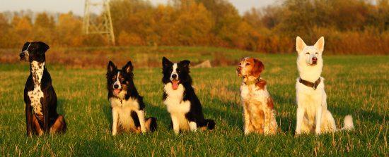 Fünf Hunde, fünf Charaktere
