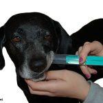 hund-erste-hilfe-fluessigkeit