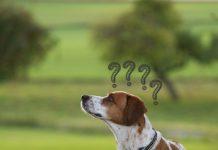hund leine fragezeichen
