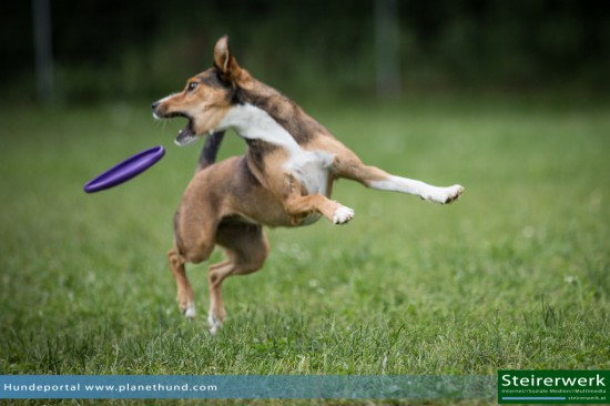 Hundefrisbee Turnier