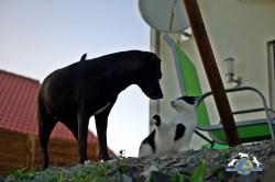 katze grenzsetzung hund