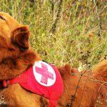 Rotes Kreuz sucht ehrenamtliche Retter mit Suchhunden
