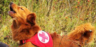 Rotes Kreuz Suchhund