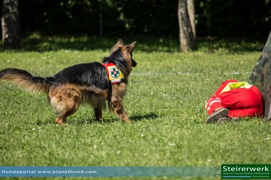 Schäferhund ÖHU Suchhundestaffel Vorführung