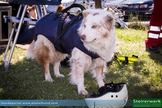 Suchhund ÖHU Suchhundestaffel