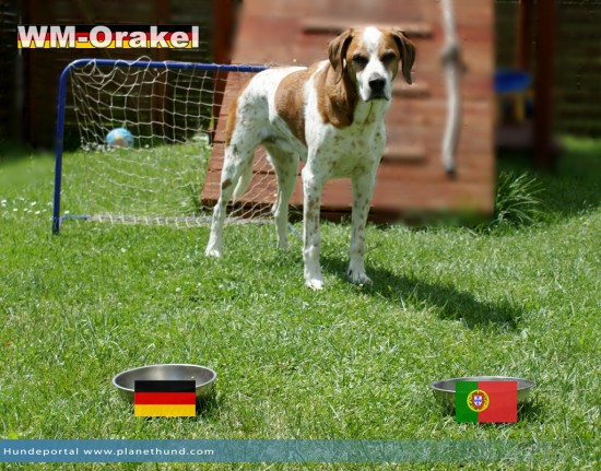 WM2014 Orakel