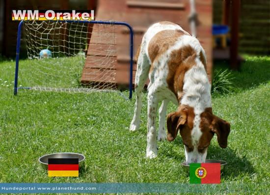 WM2014 Orakel Hund