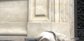 Streunerhund Bukarest